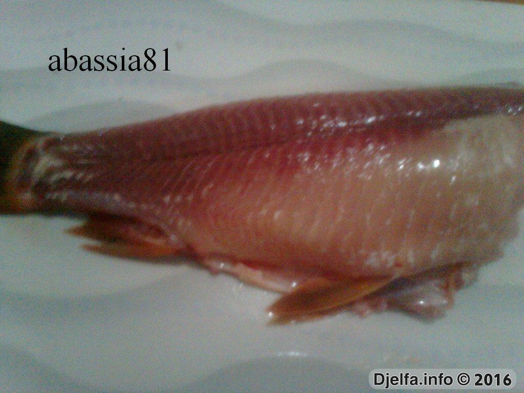 سر من أسرار سمك الباراج 145562805460071.jpg